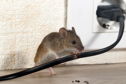 Pest Control in Soho, W1. Call Now! 020 8166 9746