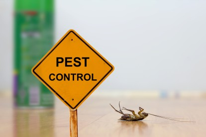 Pest Contol in Soho, W1. Call Now 020 8166 9746